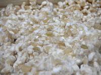 発芽玄米麹の作り方