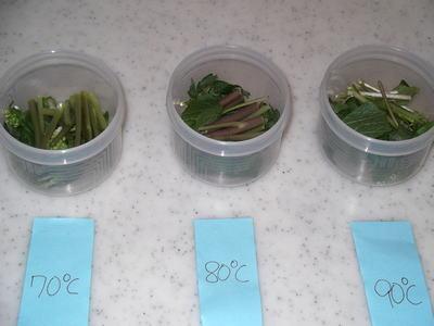 葉わさびの辛さの実験