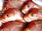 レンコ鯛を使ったレシピ