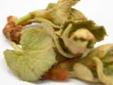 山葡萄の芽を使ったレシピ
