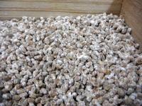 小麦麹の作り方