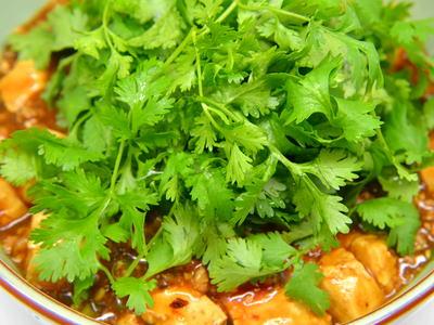 パクチー麻婆豆腐