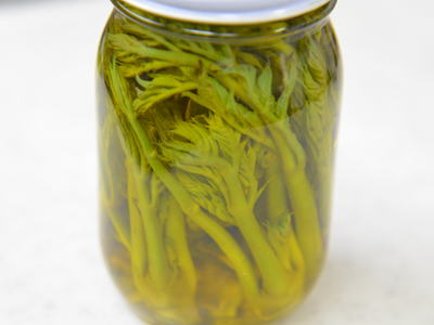 タラの芽のオリーブオイル漬け